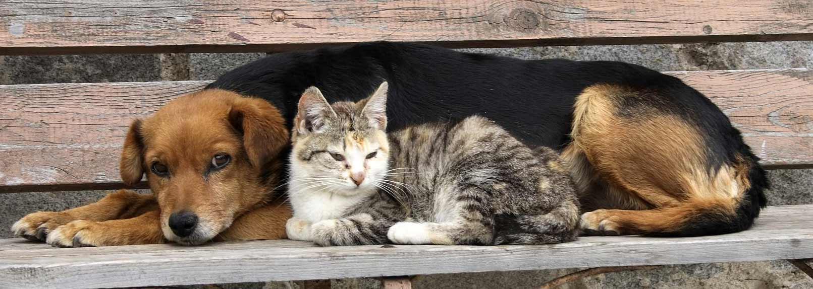 Бездомные кошки и собаки Алматы - кто их защитит?