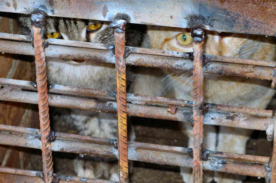 Кошек заживо замуровывают в подвалах Алматы