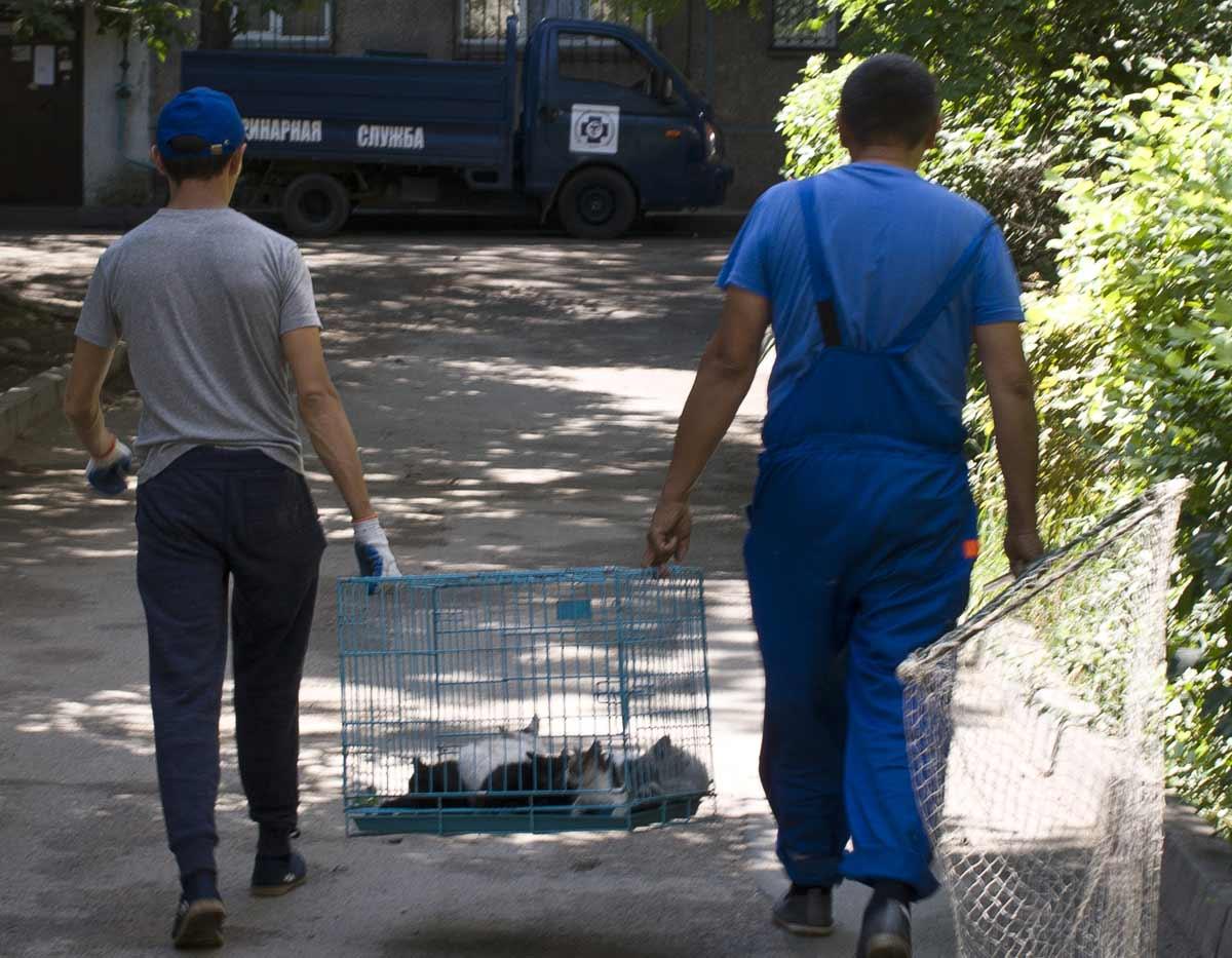 Отлов кошек в Алматы, Казахстан - Catching cats in Almaty, Kazakhstan