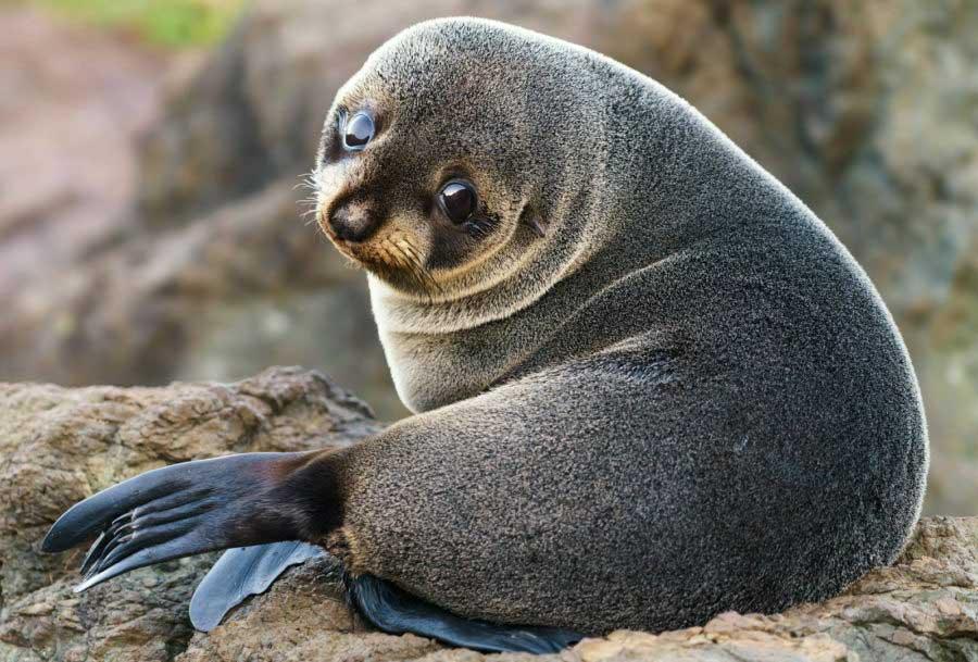 Как в Fктау живодеры убивали тюленёнка и остались безнаказанными!