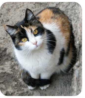 Сайт о бездомных кошках Алматы