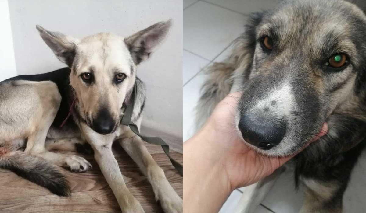 В столице Казахстана изнасиловали отловленных бродячих собак