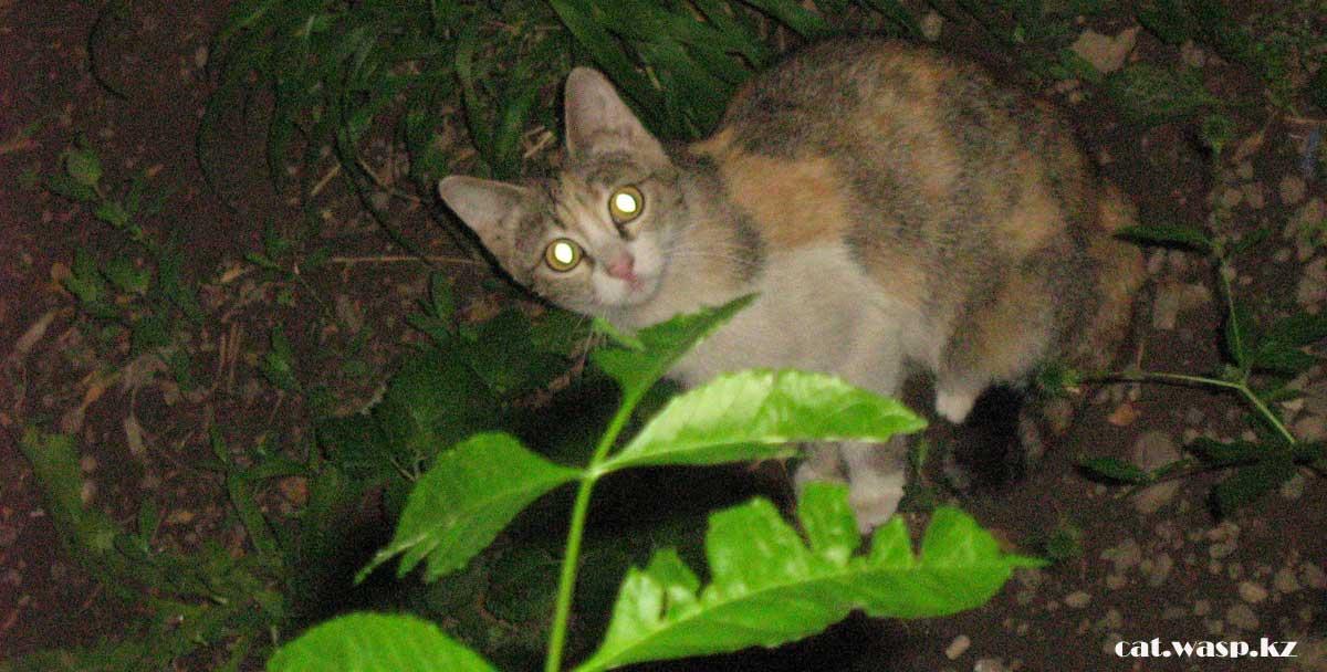 Почему бездомных кошек не стерилизуют в Алматы?