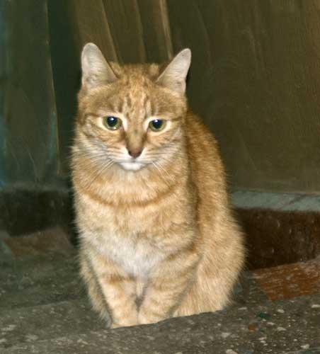 Помощь бездомным кошкам Алматы
