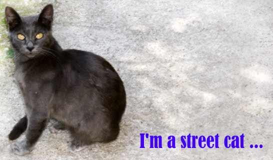 Когда воняет из подвала - виноваты ли кошки?