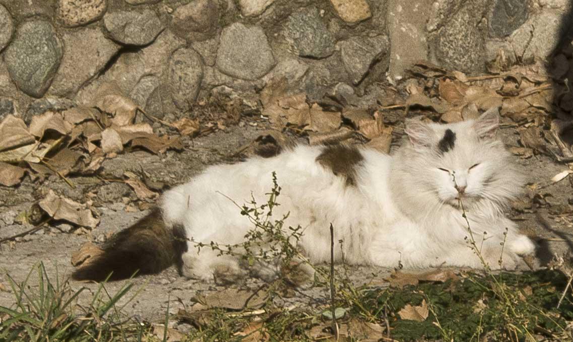 Аким Каскелена Аскар Мукашев спас кошку