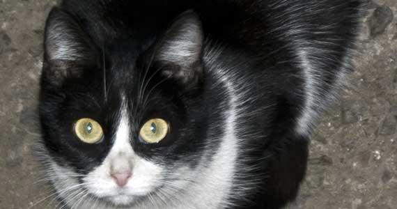 Казахстан: откуда берется жестокость к животным?