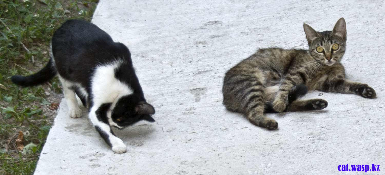Как должны жить бездомные кошки в городе?