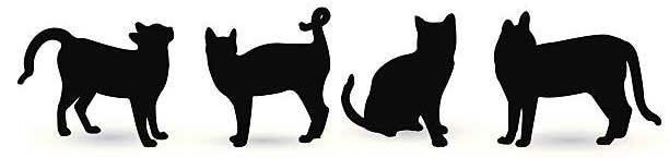 Виноваты ли кошки в том, что есть блохи?