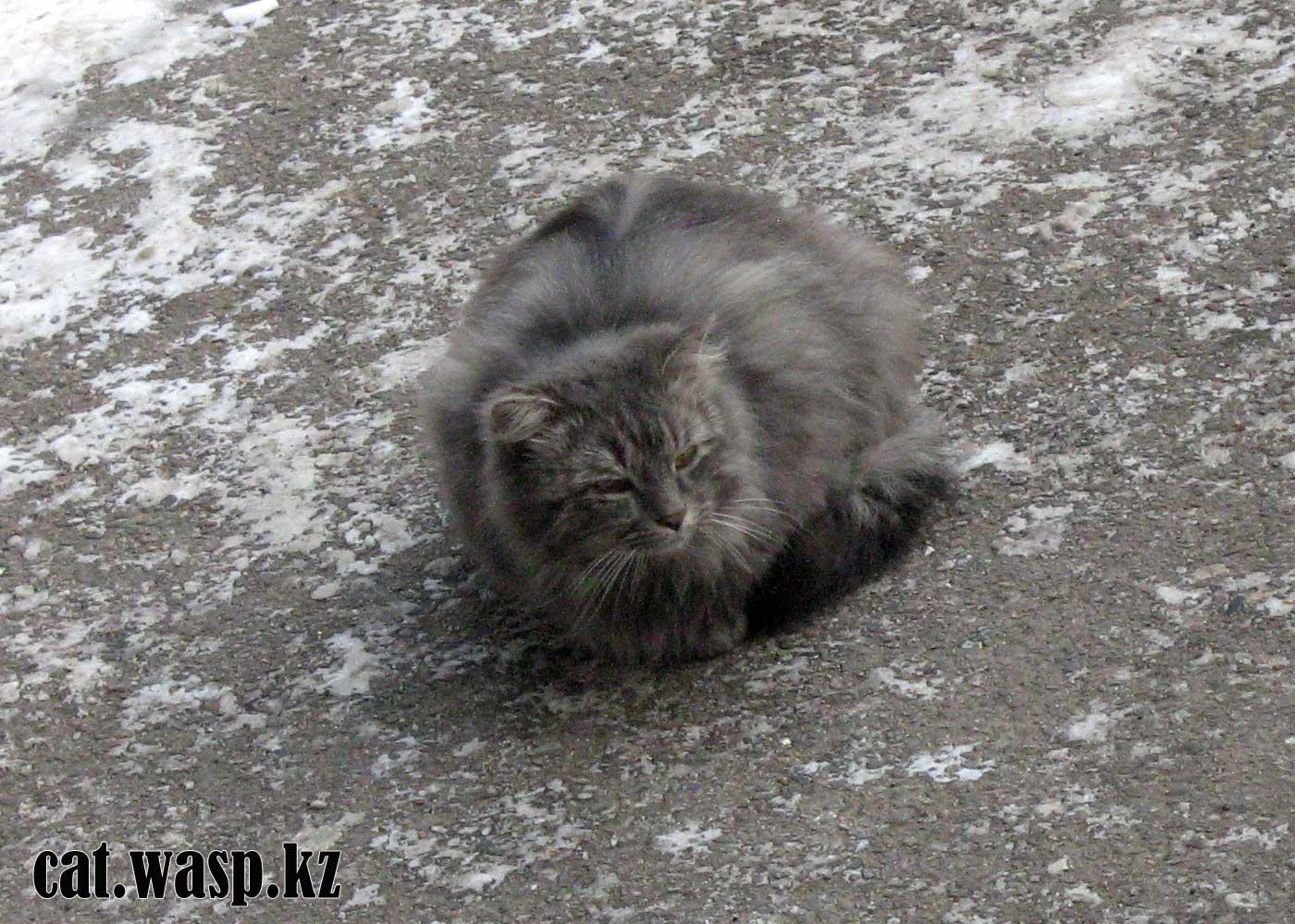 Кошки Алматы - кот Мустафа
