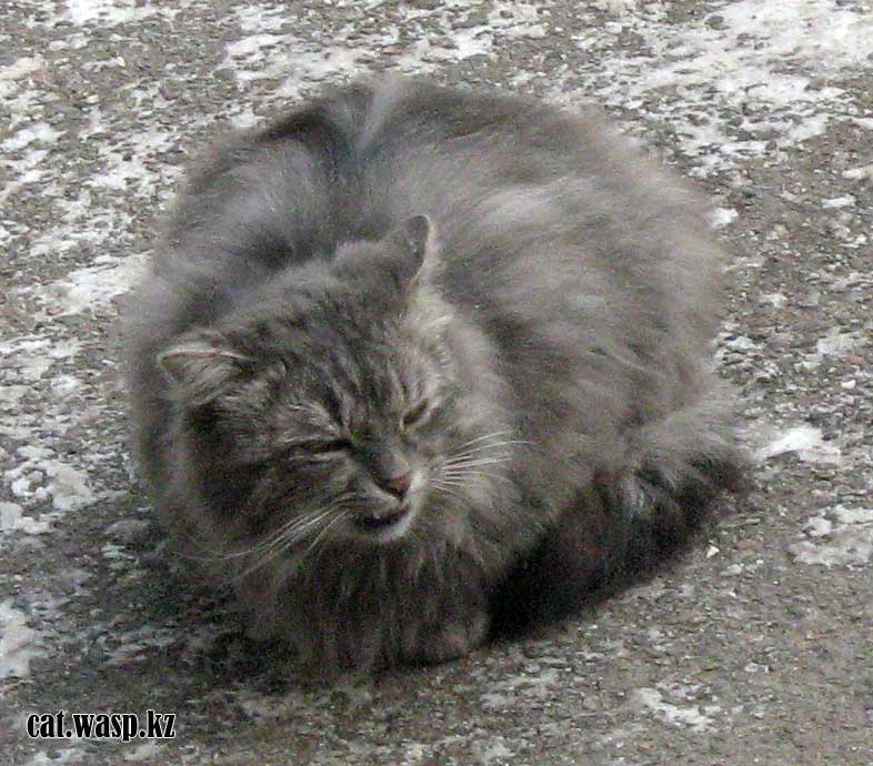 судьба кота Мустафы Алма-Ата