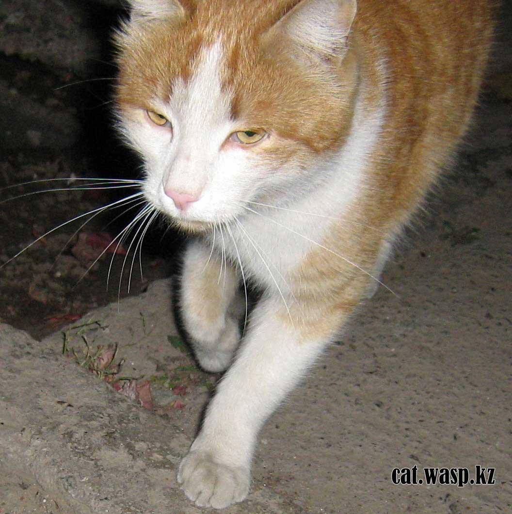 потерявшийся рыжий кот в Алматы, Орбита