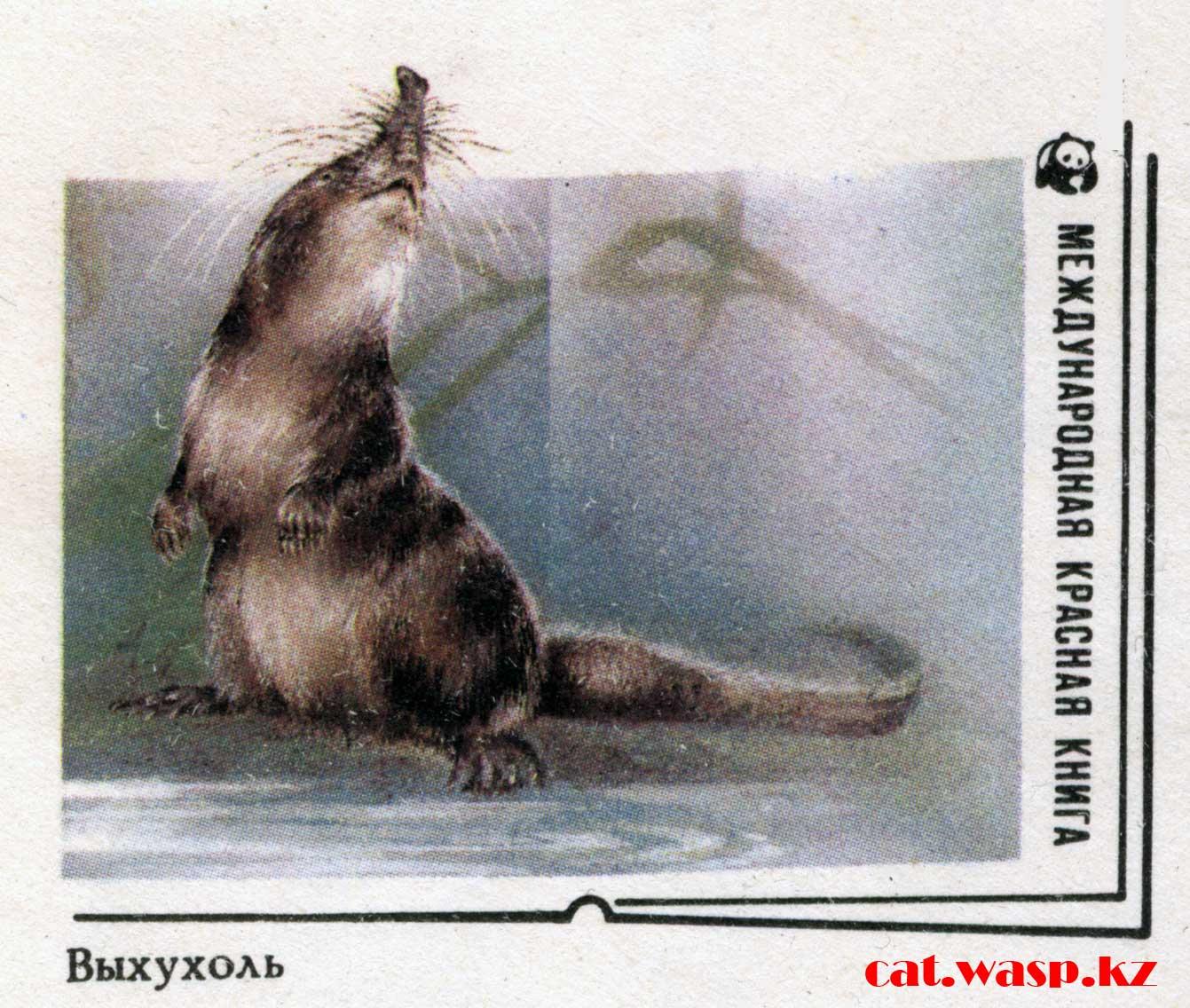 Выхухоль Красная книга, рисунок на конверте СССР