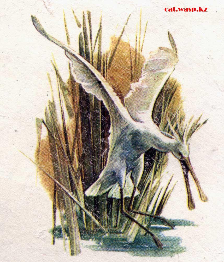 Почтовый конверт СССР, 1981 год, птица колпица