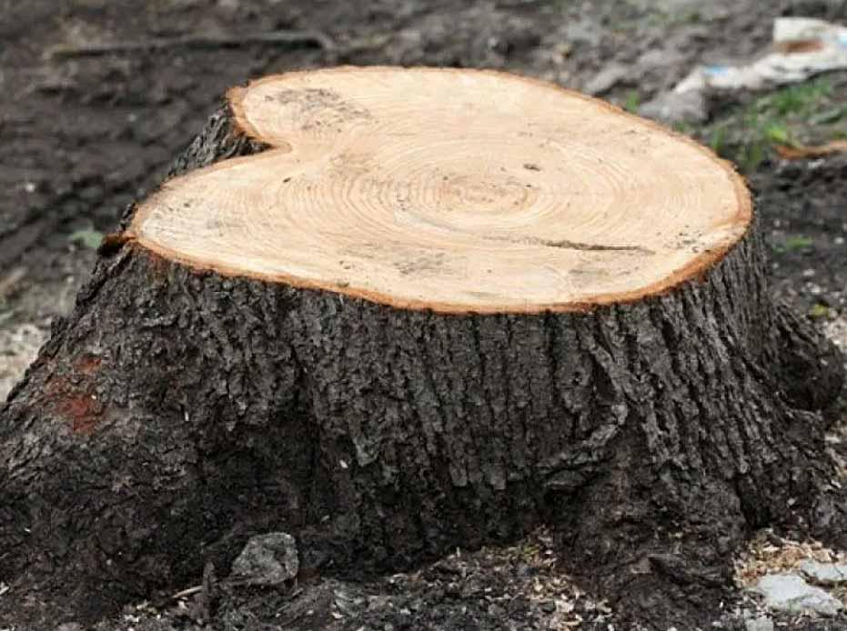 Sulpak - убийца деревьев в Алматы! Ради денег готовы на все!