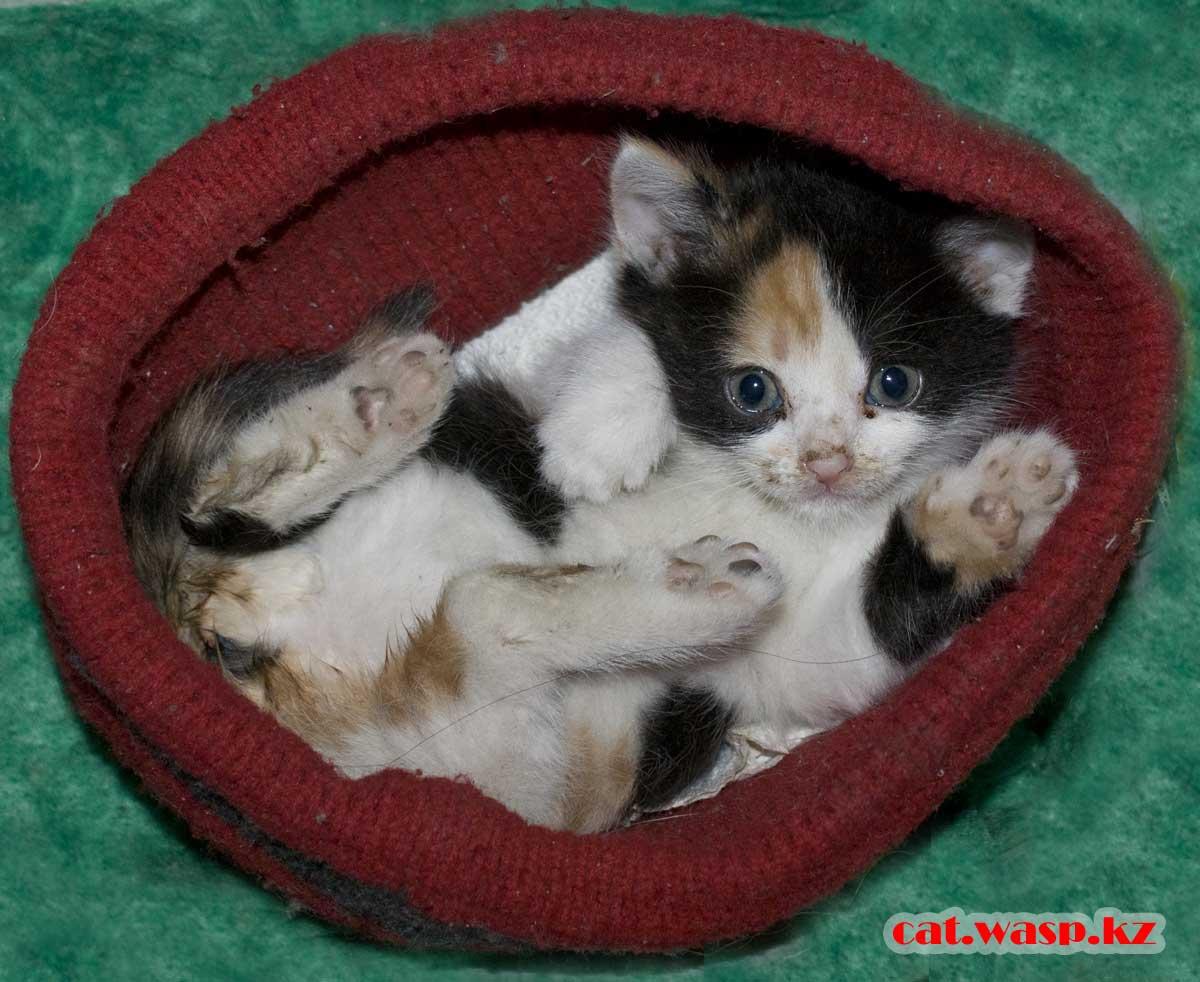 маленький котенок любит ходить чумазым, еще не умеет умываться