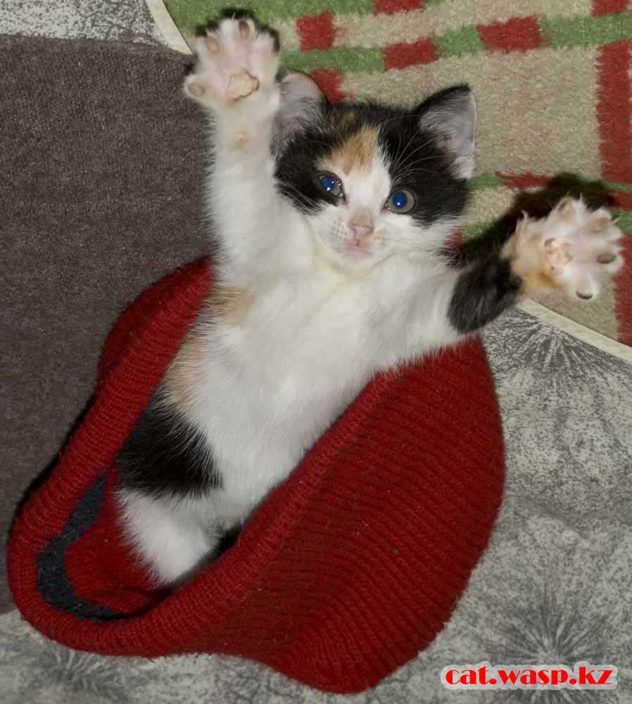 вывели блох у котенка, помогло дустовое мыло