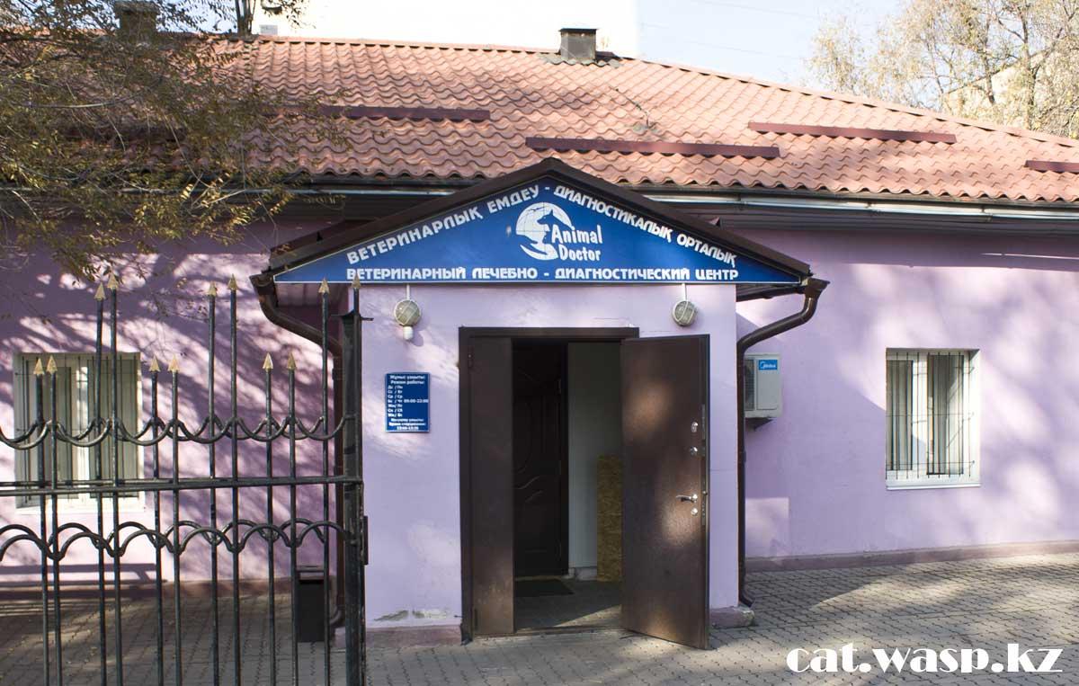 Animal Doctor ветеринарная клиника в Алматы, отзыв и впечатление