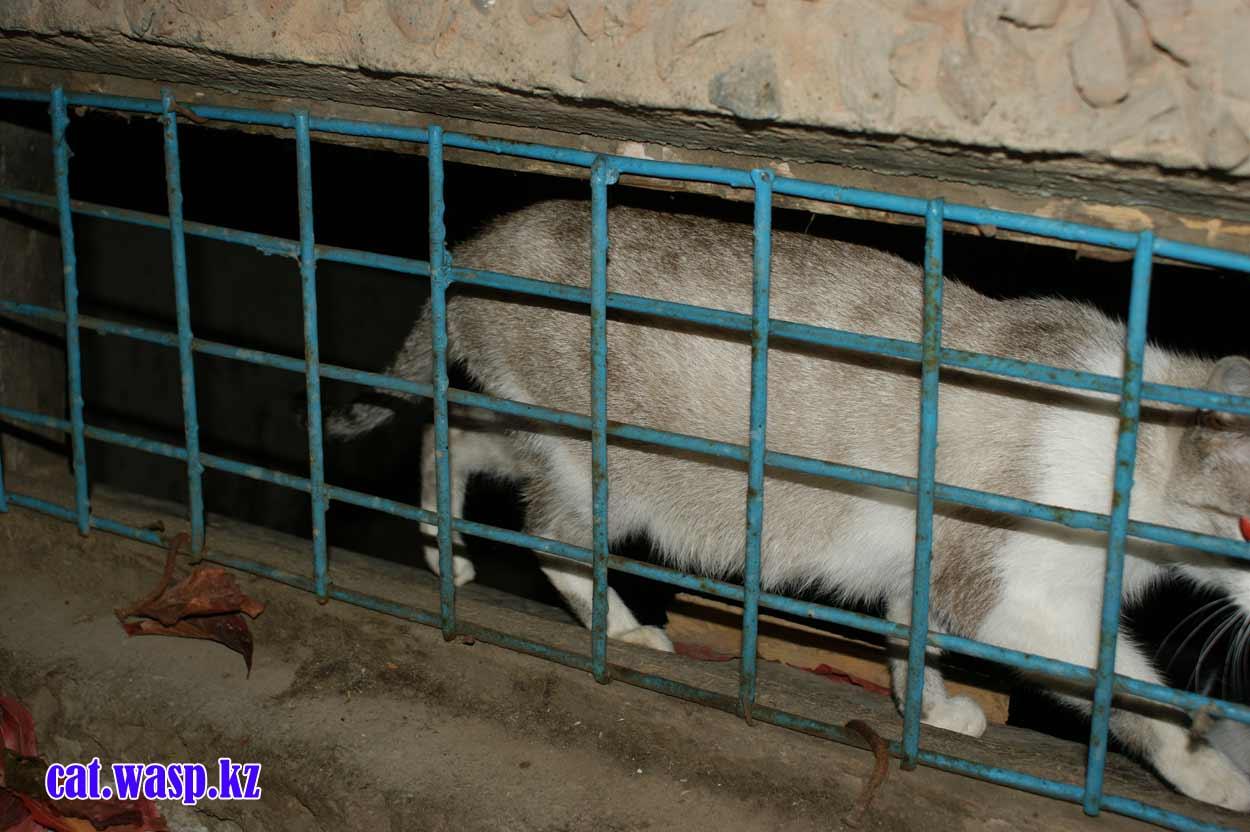 В Алматы кошек снова замуровали в подвалах!