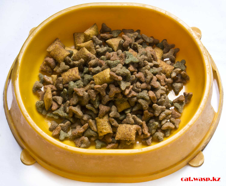 Whiskas для котят весь вред или польза сухого корма!