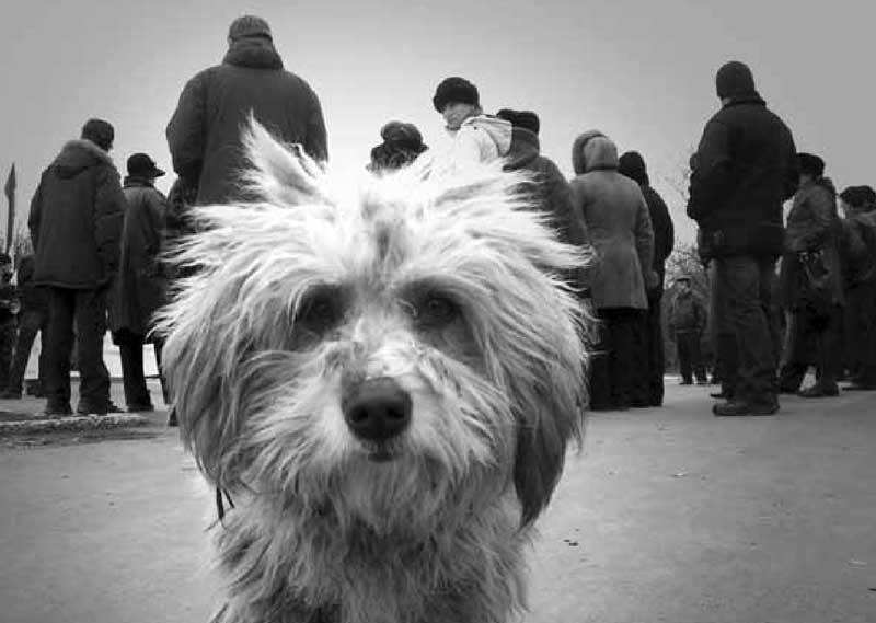 Проблема с бездомными собаками - почему люди стали жестокими?