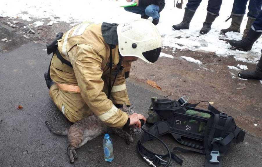 Спасение кота пожарниками в Алматы - кота откачали и спасли!
