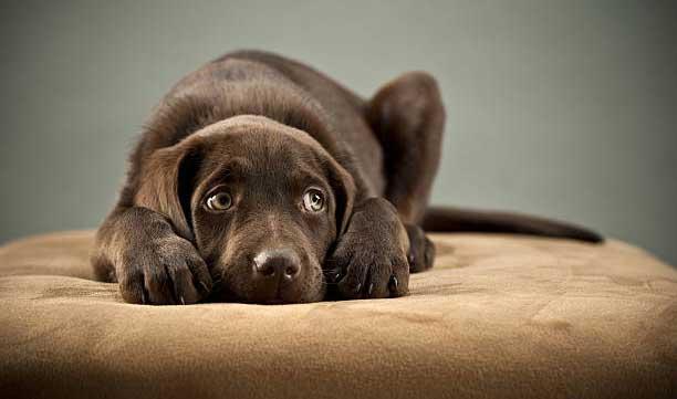 9 тысяч тенге штраф за собачий концлагерь, издевательства над живыми