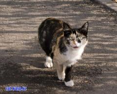 Безхвостая кошка - Алматы, Орбита-1, дом 10, я ее выкладывал уже несколько лет... прошлую зиму она не пережила, и сдается мне не без заботливой людской помощи...