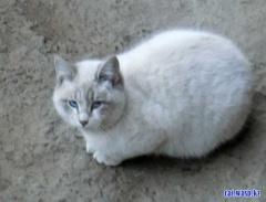 Милый котик, красавец... сколько людей хотели его взять к себе домой, но не успели...