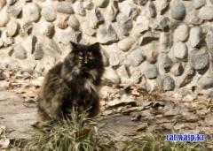 Алматы, Орбита-1, дом 8 - там бабушки кормят кошек... этих опекунов ежедневно заживо пытаются загрызть люди-псы...