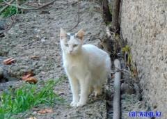 Моя кошка... уличная, бездомная - мишень современных детей и взрослых РК...