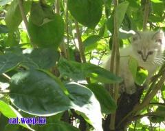 Хорошо котенку - залез на дерево и спит в безопасности!