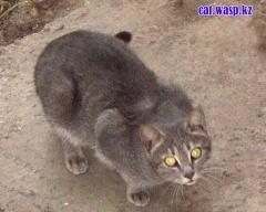 Ночная кошка Алма-Аты...