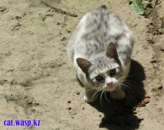 Котик по прозвищу Лысый - почему такое прозвище неизвестно...