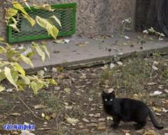 Алматы, Орбита-4, типичная картина: одинокая пугливая кошка и заколоченные оконца в подвалы... обратите внимание на решетку - правление КСК видимо неплохо так прикарманили на этом гламуре деньги жильцов...