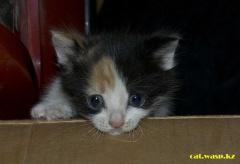 Подкидыш ко мне под окно... грустный и одинокий котенок... нет и месяца в его жизни...