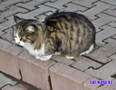 Кот дежурит у зоомагазина Джунгли, Алматы, Орбита-2