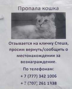 Пропала кошка, откликается на кличку Стеша - Орбита-2, по Навои...