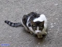 Кошка по кличке Хулиганка - Алматы, Орбита-2, веселая и добрая... и не хулиганит, а играет.