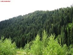 Заилийский алатау - Большое Алмаатинское ущелье, дорога на БАО