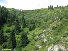 Заилийский Алатау, предгорья в сторону БАО