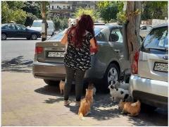 Арабские страны - женщина кормит уличных кошек...