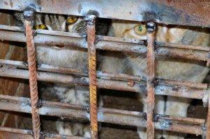 Кошек замуровали в подвале многоэтажки Усть-Каменогорска