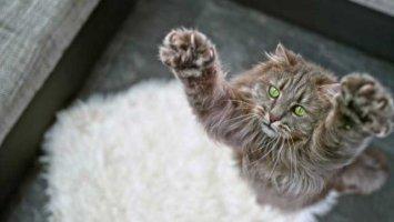 Бурятский кот-пожарник