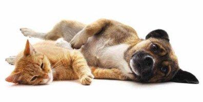 Казахстан: ямы с мертвыми собаками