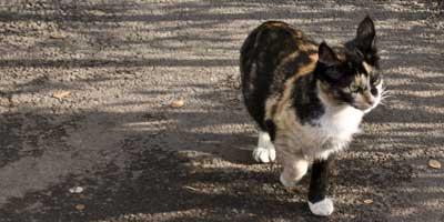 Kitekat: плевать на кошек!..